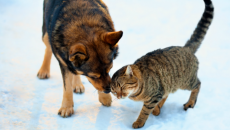 Cats and Dogs Cold Weather