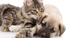 Pets Depressed