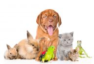 Owning a Pet Can Improve Your Health