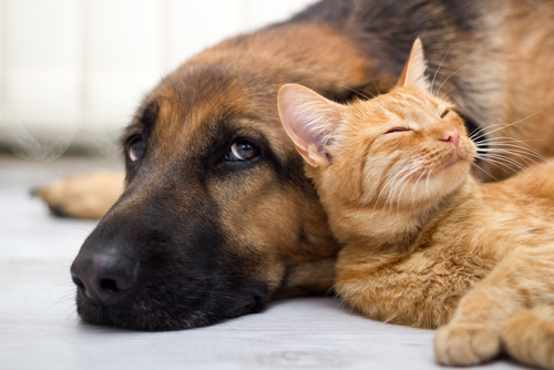 Learn How To Perform CPR On Your Dog Or Cat