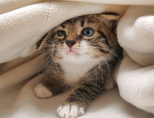 do weighted blankets work